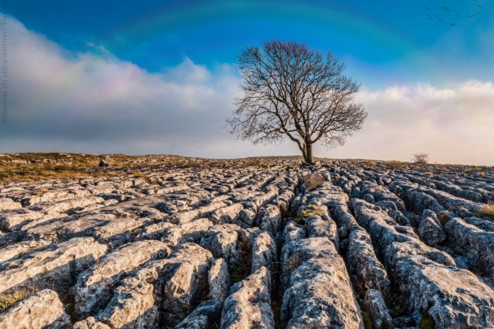 Lone Tree - Malham