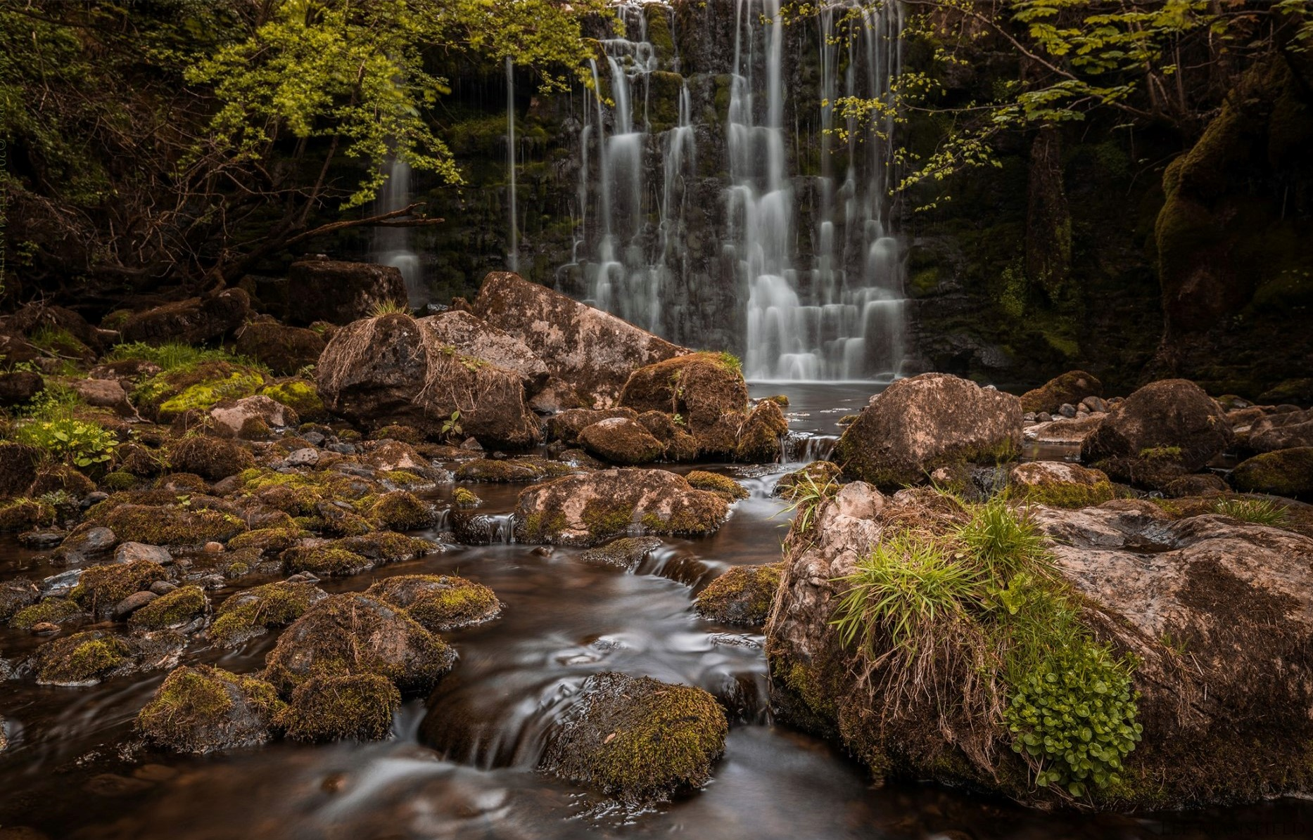 Scale Haw Force